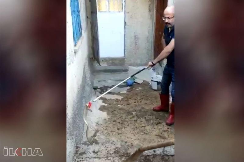 Eve giren yılanı Kovancılar itfaiye ekipleri çıkardı