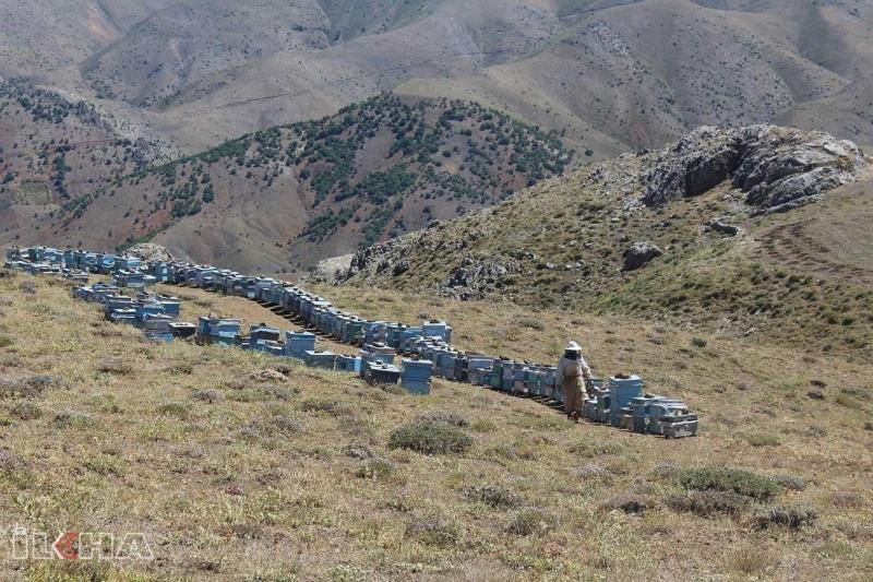 Güvenlik endişelerinin kalktığı Akdağ Yaylası arıcıları cezbediyor