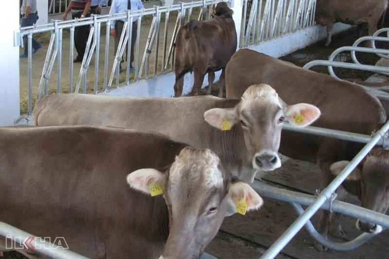 Hayvansal ürünlerde ihracat artışı